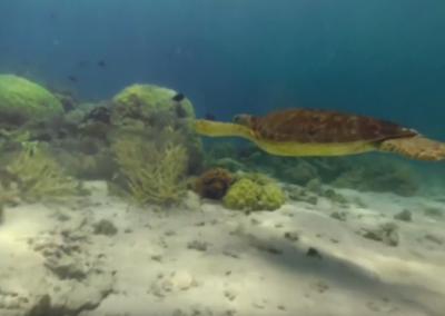 Great Barrier Reef in 360º