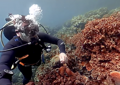 A 360-degree Tour of the Mysterious, Magical Corals of Palau