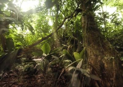 Costa Rican Jungle 360° | Planet Earth II