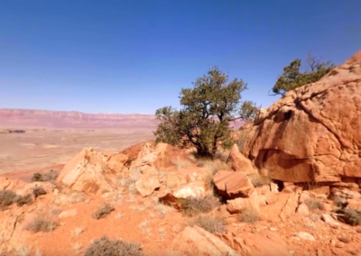 Beautiful Desert Canyons 360° | Planet Earth II