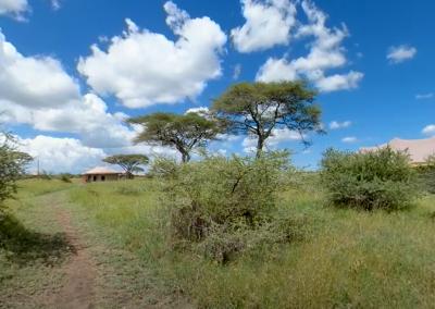 Tour Ehlane Plains Camp, Serengeti