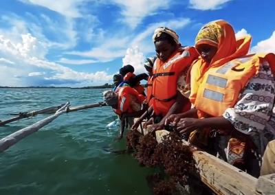 Making Waves: Reengineering Aquaculture in Tanzania