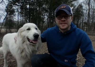 Using Great Pyrenees Livestock Guardian Dogs to Protect Chickens