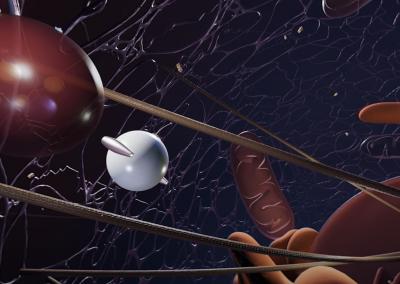 Extracellular Vesicles: The Cells' Secret Messengers