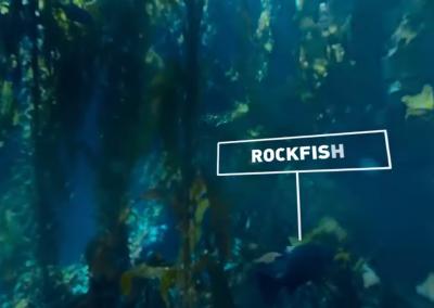 Diving Exploration of Kelp Forest Aquarium