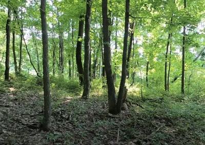 Laurel Highlands: Temperate Deciduous Forest